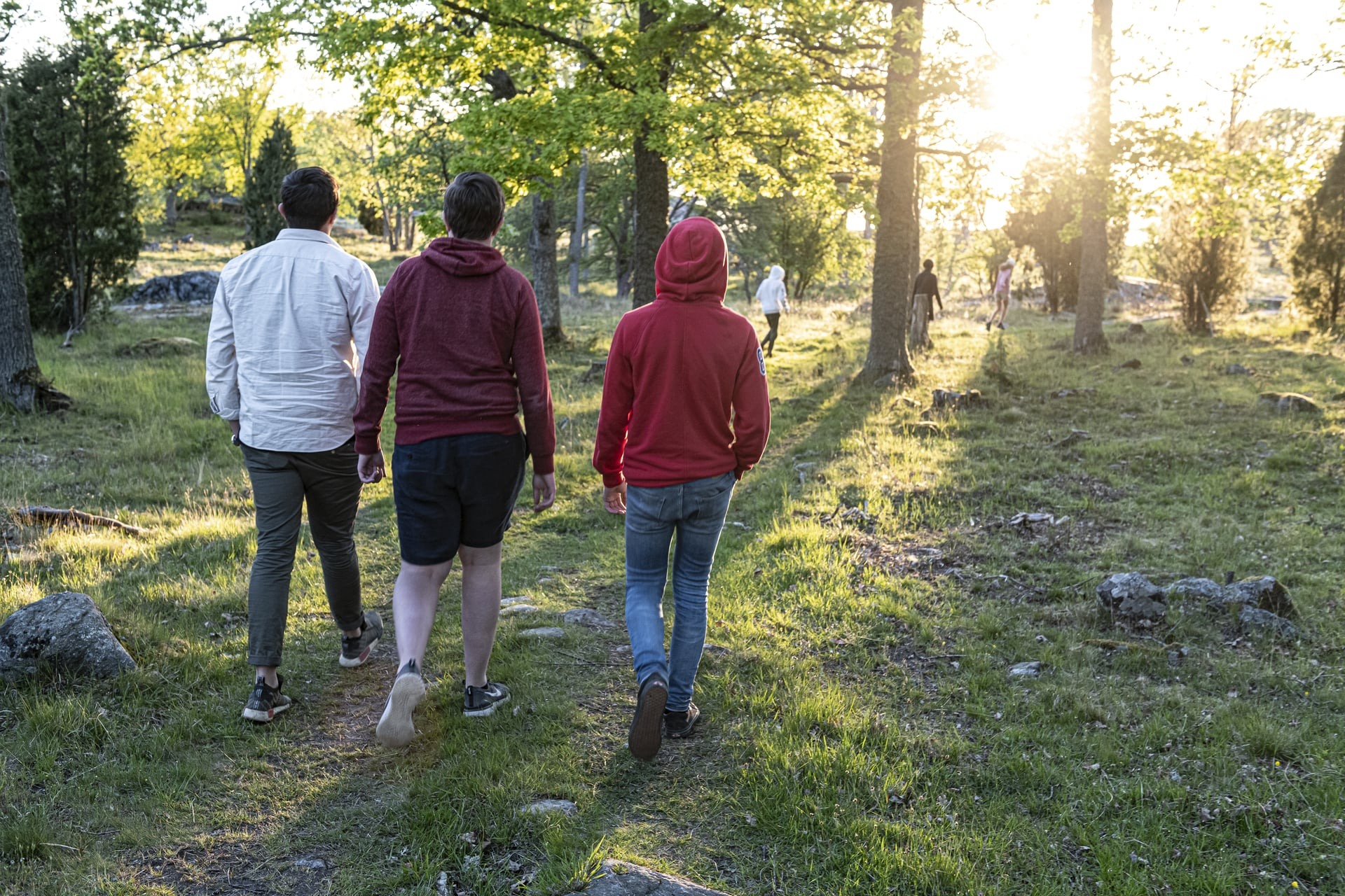 Promenad i skog